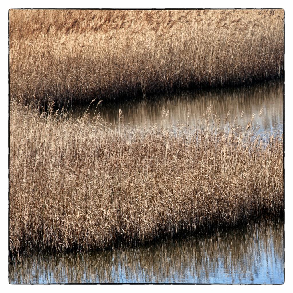 © Perry van Kempen (bij gedicht Zwevend Riet)